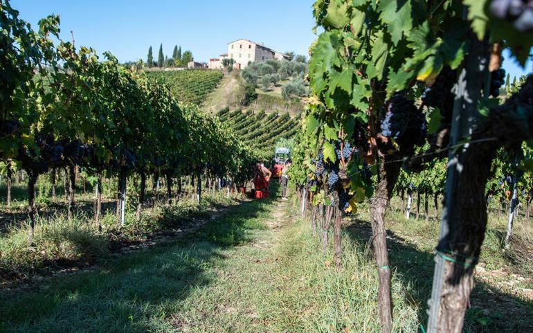 Pagliarese's 2019 harvest